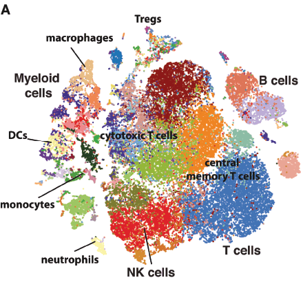 Mapping the immune response to cancer one cell at a time